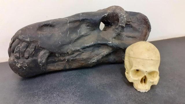 Lộ diện cỗ máy sát thủ 260 triệu năm tuổi - 2
