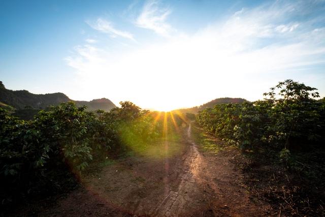 Những vùng trồng cà phê Arabica ngon nhất Việt Nam - 1