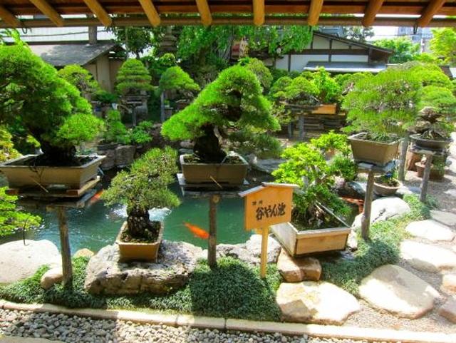 Nơi thỏa niềm đam mê của những người yêu bonsai - 3