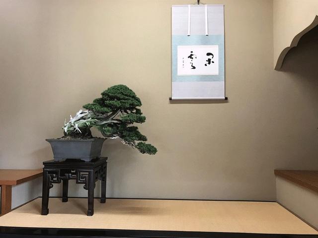 Nơi thỏa niềm đam mê của những người yêu bonsai - 5