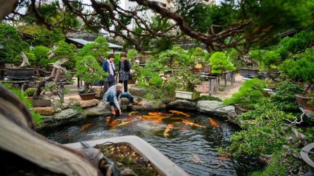 Nơi thỏa niềm đam mê của những người yêu bonsai - 6