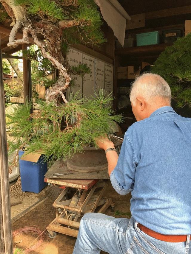 Nơi thỏa niềm đam mê của những người yêu bonsai - 8