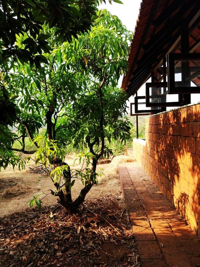 Cặp vợ chồng 60 tuổi chi 300 triệu đồng làm nhà vườn để tận hưởng tuổi già - 5