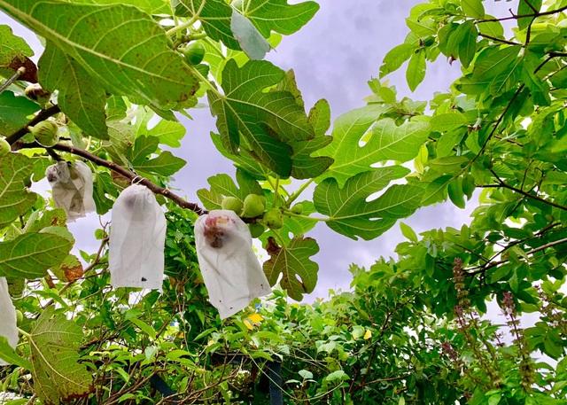 Khu vườn trên không trăm loại rau trái tươi tốt của mẹ đảm Sài Gòn - 13