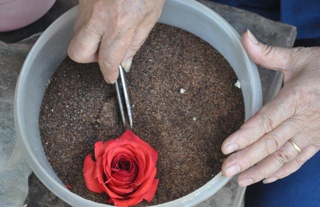 Khởi nghiệp 50 tuổi, nữ giúp việc trở thành chủ cơ sở hoa bất tử - 2