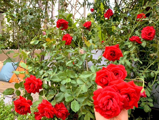 Khu vườn trên không trăm loại rau trái tươi tốt của mẹ đảm Sài Gòn - 3