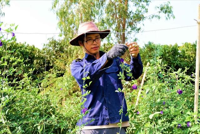 Chàng trai trẻ biến đất khô cằn thành nông trại dược liệu - 3