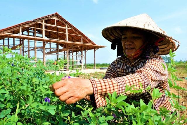 Chàng trai trẻ biến đất khô cằn thành nông trại dược liệu - 5