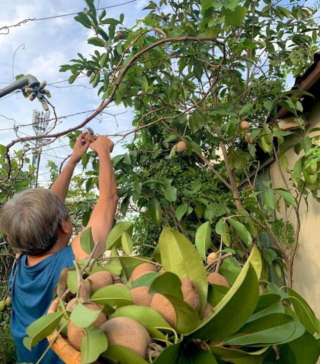 Khu vườn trên không trăm loại rau trái tươi tốt của mẹ đảm Sài Gòn - 4