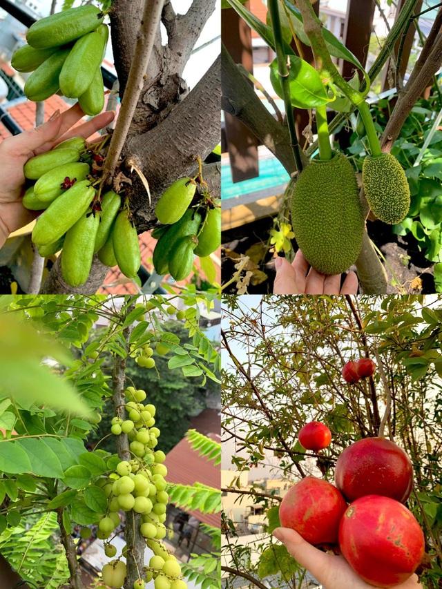 Khu vườn trên không trăm loại rau trái tươi tốt của mẹ đảm Sài Gòn - 7