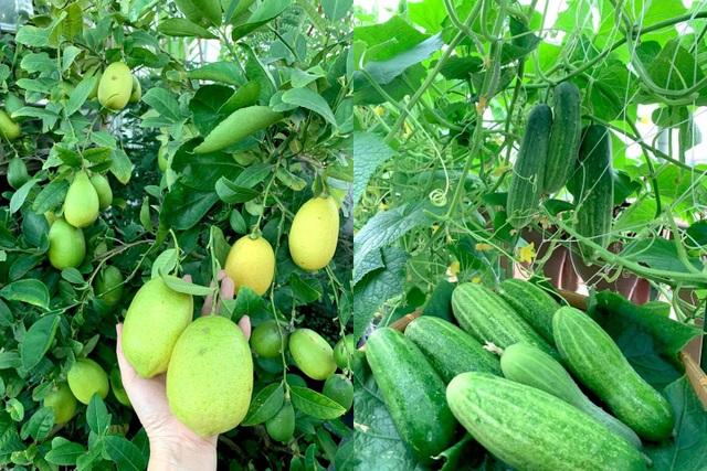 Khu vườn trên không trăm loại rau trái tươi tốt của mẹ đảm Sài Gòn - 8