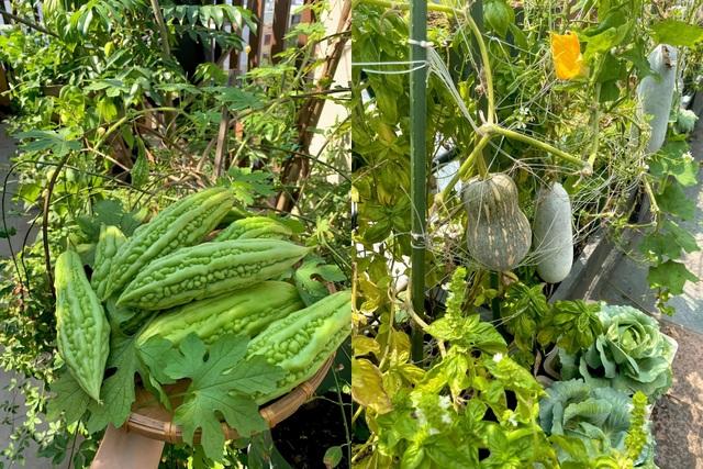 Khu vườn trên không trăm loại rau trái tươi tốt của mẹ đảm Sài Gòn - 10