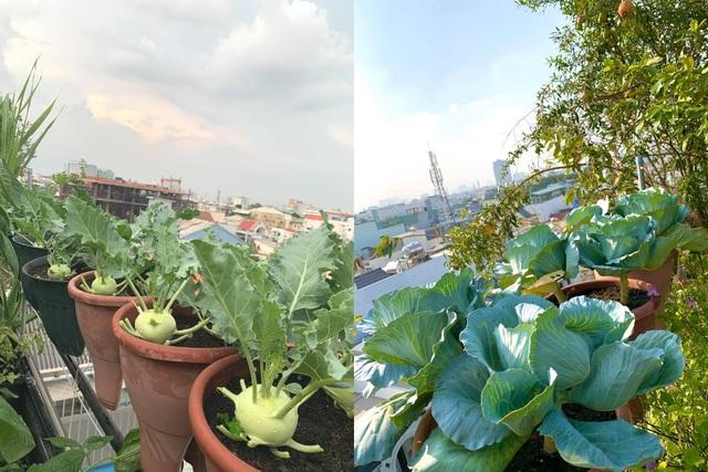 Khu vườn trên không trăm loại rau trái tươi tốt của mẹ đảm Sài Gòn - 14