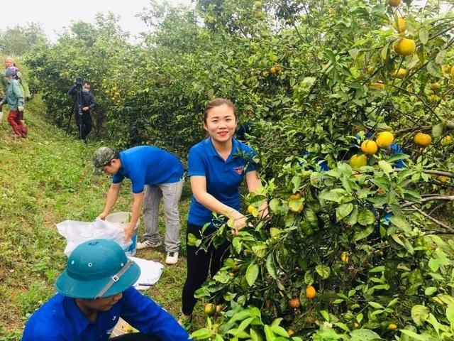 Giải cứu quýt cho người nông dân ở vùng đất đỏ xứ Nghệ - 1
