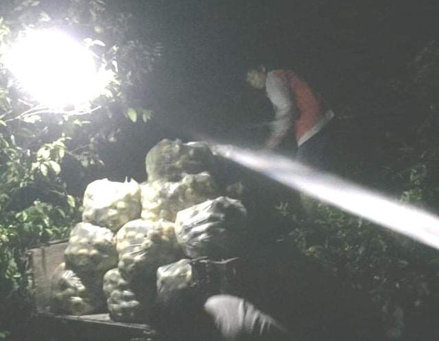 Giải cứu quýt cho người nông dân ở vùng đất đỏ xứ Nghệ - 5