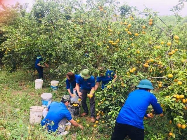 Giải cứu quýt cho người nông dân ở vùng đất đỏ xứ Nghệ - 2