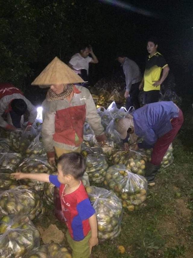 Giải cứu quýt cho người nông dân ở vùng đất đỏ xứ Nghệ - 4