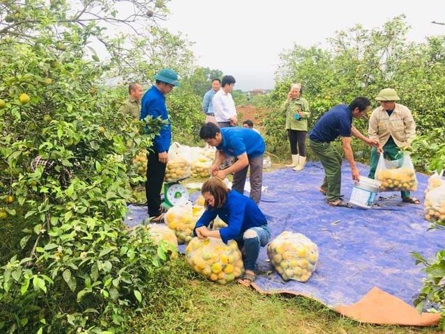 Giải cứu quýt cho người nông dân ở vùng đất đỏ xứ Nghệ - 3