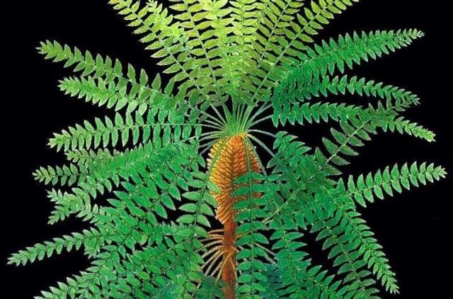 Hóa thạch thực vật 300 triệu năm hé lộ bí mật của tiến hóa - 1