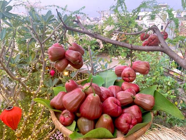Khu vườn trên không trăm loại rau trái tươi tốt của mẹ đảm Sài Gòn - 6