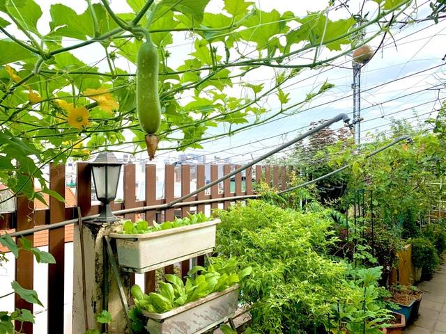 Khu vườn trên không trăm loại rau trái tươi tốt của mẹ đảm Sài Gòn - 5