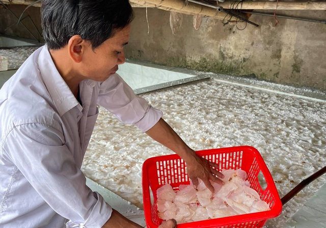 Vào mùa sứa biển, ngư dân kiếm 450.000 đồng/ngày - 6