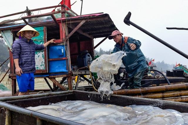 Vào mùa sứa biển, ngư dân kiếm 450.000 đồng/ngày - 1
