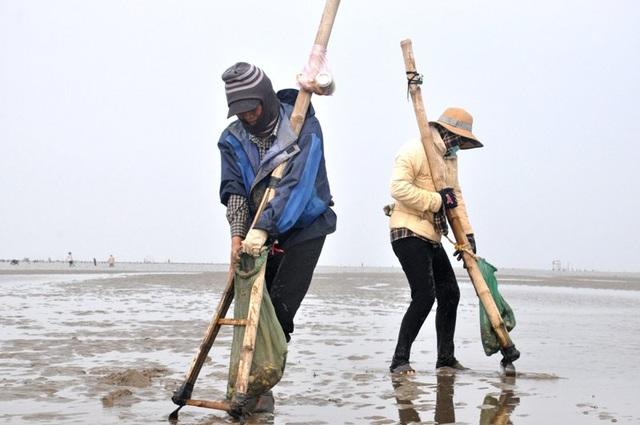 Nghề đi giật lùi nơi cửa biển kiếm gần nửa triệu đồng/ngày - 6