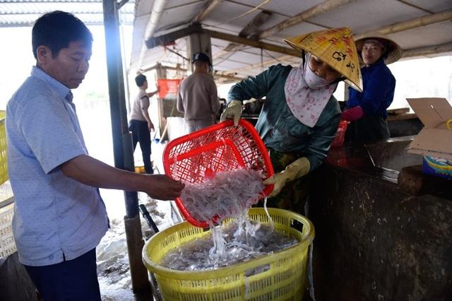 Vào mùa sứa biển, ngư dân kiếm 450.000 đồng/ngày - 5