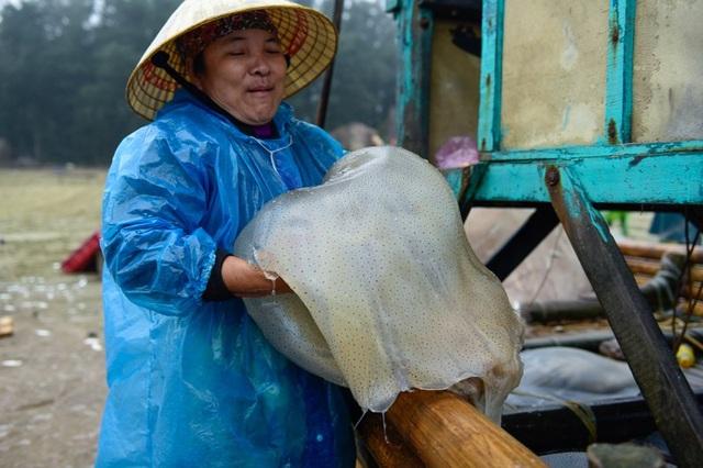 Vào mùa sứa biển, ngư dân kiếm 450.000 đồng/ngày - 7