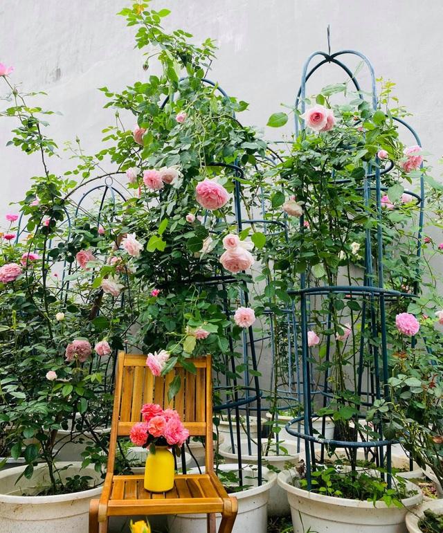Vườn hồng trăm gốc nhập ngoại quý hiếm của mẹ đảm xinh đẹp ở Hà Giang - 10