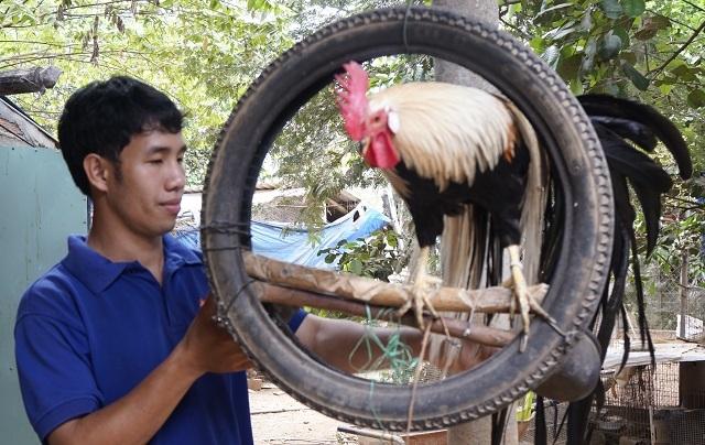 Cử nhân bỏ việc ở phố về quê nuôi chim trĩ, thành công ngoài mong đợi - 1