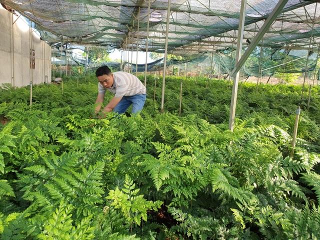 Thu trăm triệu mỗi tháng từ vườn dương xỉ có một không hai ở Đắk Nông - 1