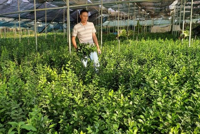 Thu trăm triệu mỗi tháng từ vườn dương xỉ có một không hai ở Đắk Nông - 2