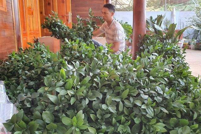 Thu trăm triệu mỗi tháng từ vườn dương xỉ có một không hai ở Đắk Nông - 3