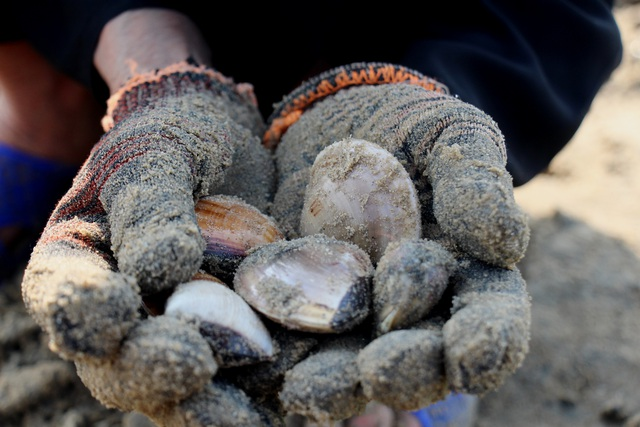 Nhọc nhằn nghề bới cát tìm con sò - 3