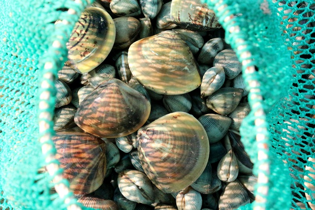 Nhọc nhằn nghề bới cát tìm con sò - 5
