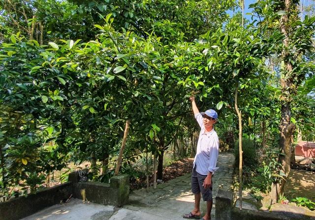 Loại cây xóa đói giảm nghèo có một không hai của người dân Quảng Nam - 1