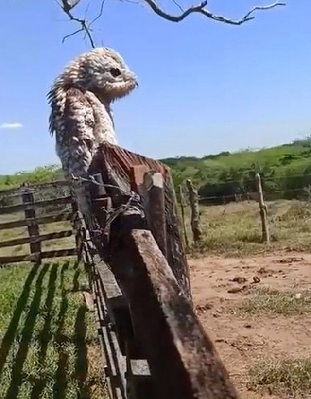 Chim khổng lồ xuất hiện dọa người sợ chết khiếp - 2