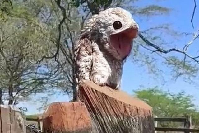 Chim khổng lồ xuất hiện dọa người sợ chết khiếp - 1