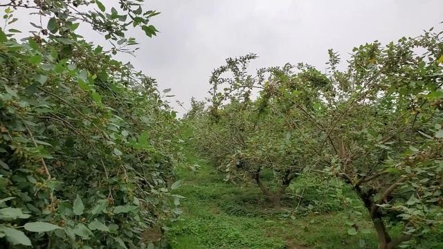 Hà Nội: Người trồng dâu tằm tất bật vào vụ thu hoạch lớn nhất trong năm - 10