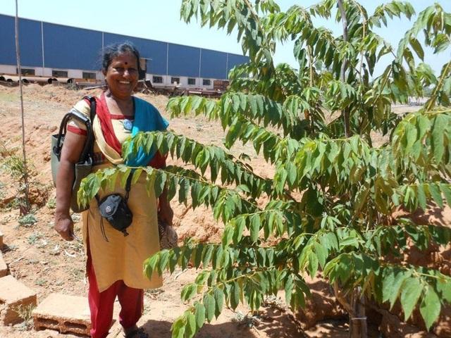 Ngưỡng mộ người phụ nữ trồng hơn 73.000 cây phủ xanh nơi mình sống - 1
