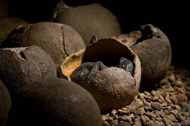 Tìm thấy hóa thạch khủng long và trứng còn nguyên phôi - 1