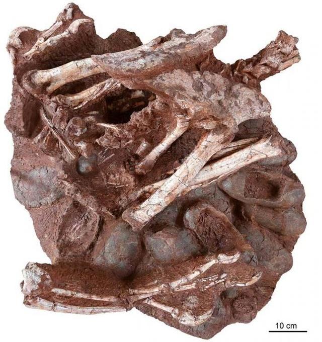 Tìm thấy hóa thạch khủng long và trứng còn nguyên phôi - 3