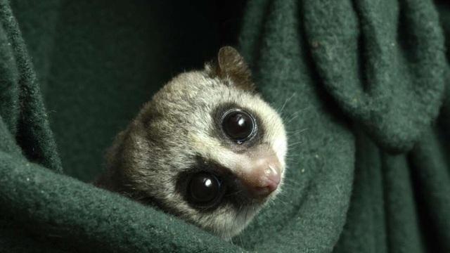 Bí mật ngủ đông của động vật có thể giúp con người chinh phục vũ trụ - 1