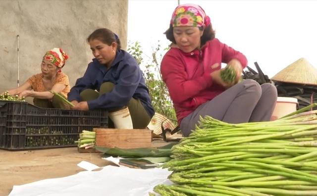 Măng tay xanh được các thành viên HTX nông nghiệp xã Tây Hiếu đóng gói cẩn thận rồi trước khi xuất bán ra thị trường.