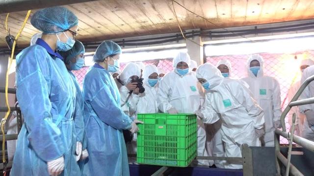 Việt Nam nhân bản thành công giống lợn tưởng đã tuyệt chủng từ mẩu mô tai - 2