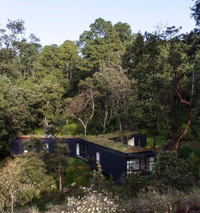 Mát mắt với những căn nhà siêu xanh từ rừng sâu tới giữa đô thị - 6
