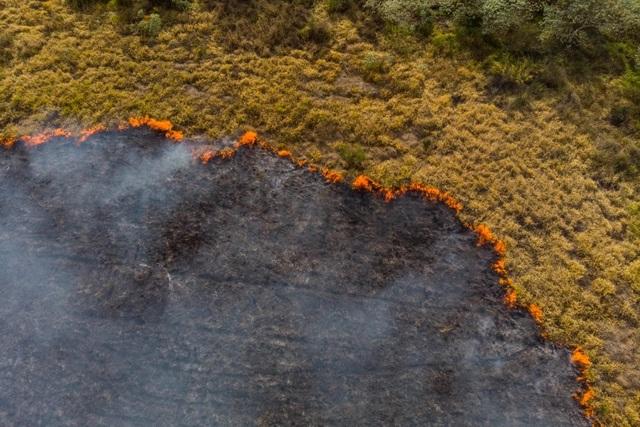 Rừng mưa Amazon đang làm khí quyển Trái Đất càng nóng lên - 1