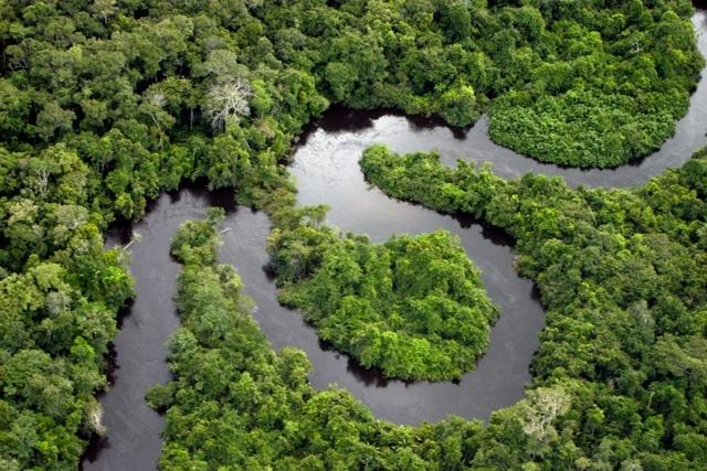 Rừng mưa Amazon đang làm khí quyển Trái Đất càng nóng lên - 2